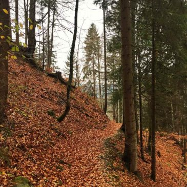 Berghofer-Wald-Trail