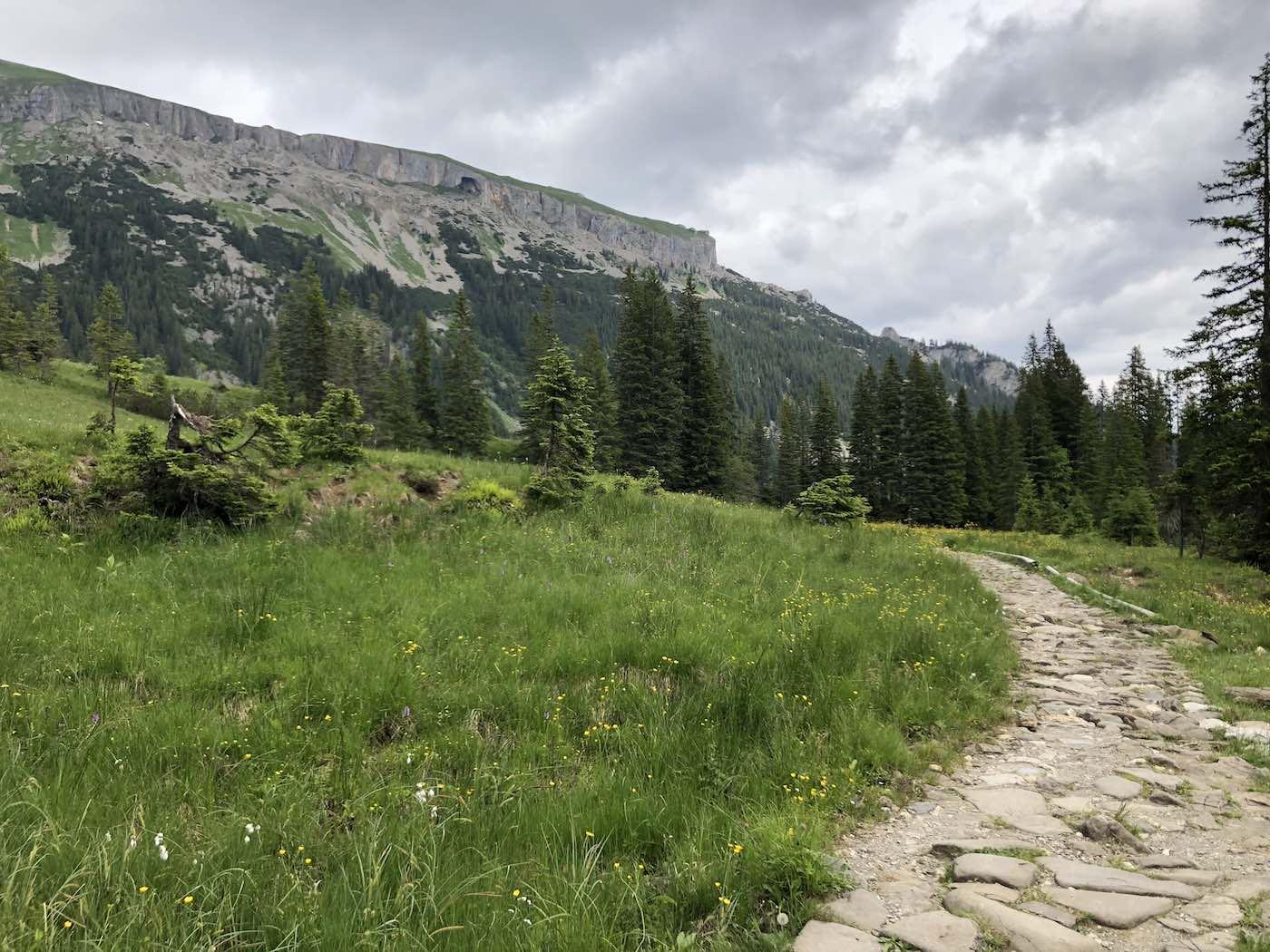 Schöner Weg zwischen Melköde und Schearzwasserhütte